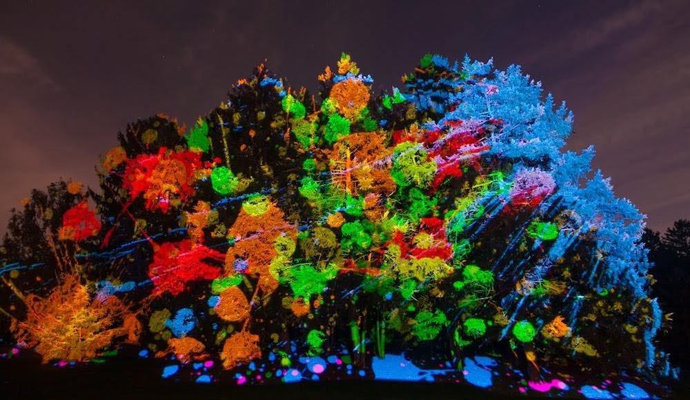Treemagnination morton-arboretum-illumination-seasonal-events