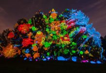 Treemagnination morton-arboretum-illumination-seasonal-events