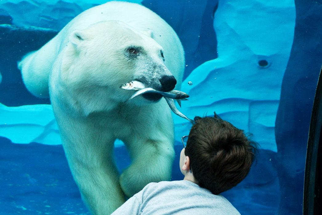 Detroit Zoo planning aquarium for downtown