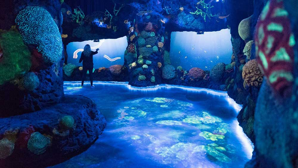national geographic encounter night coral reef
