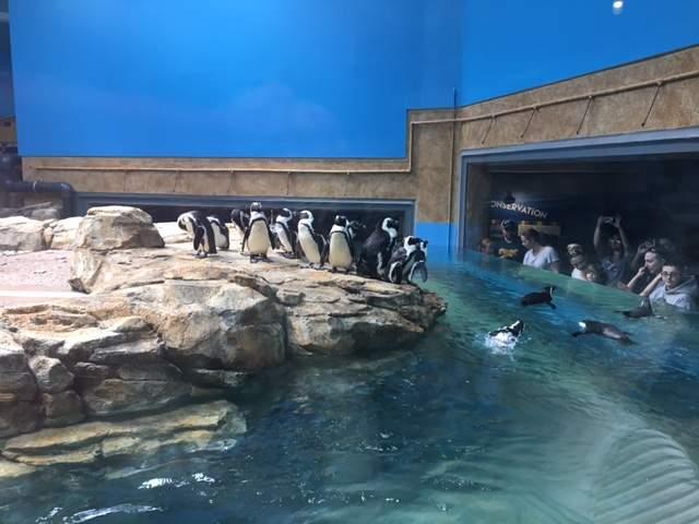 penguins in pool at shores of africa indoor exhibit