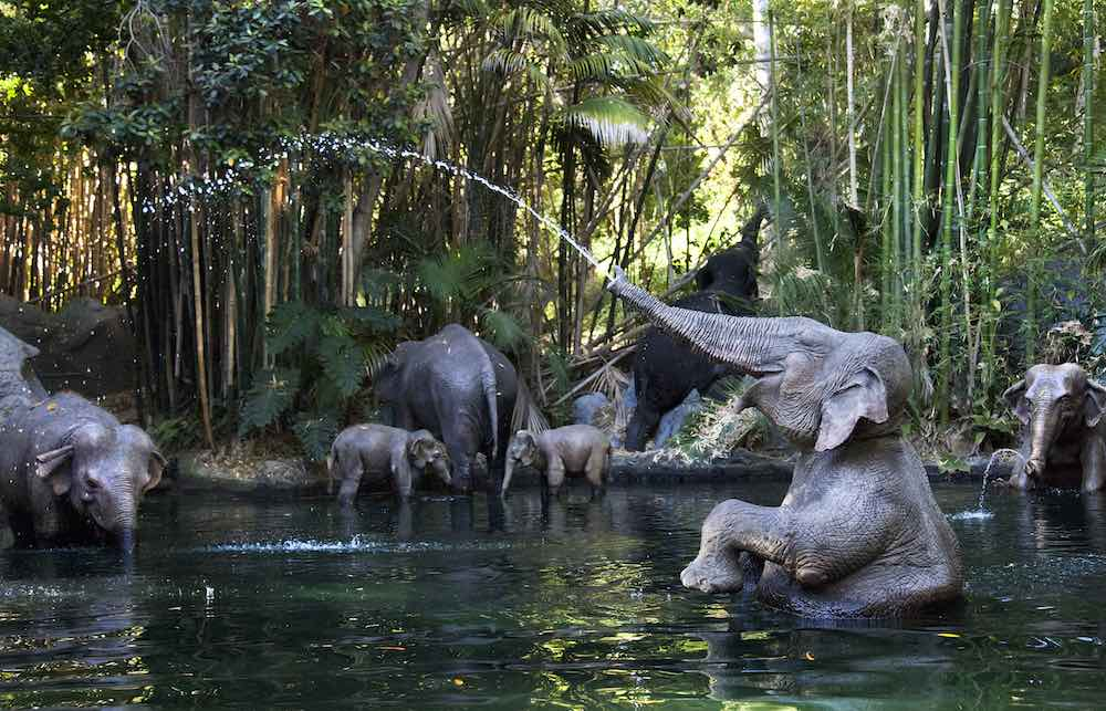 elephants on jungle cruise disneyland