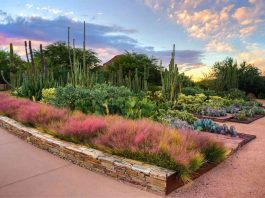 Desert_Botanical_Garden_Adam_Rodriguez