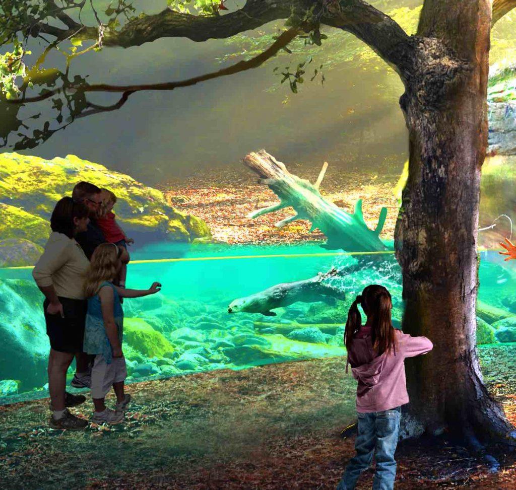otter FreshWater exhibit st-louis-aquarium x (1)