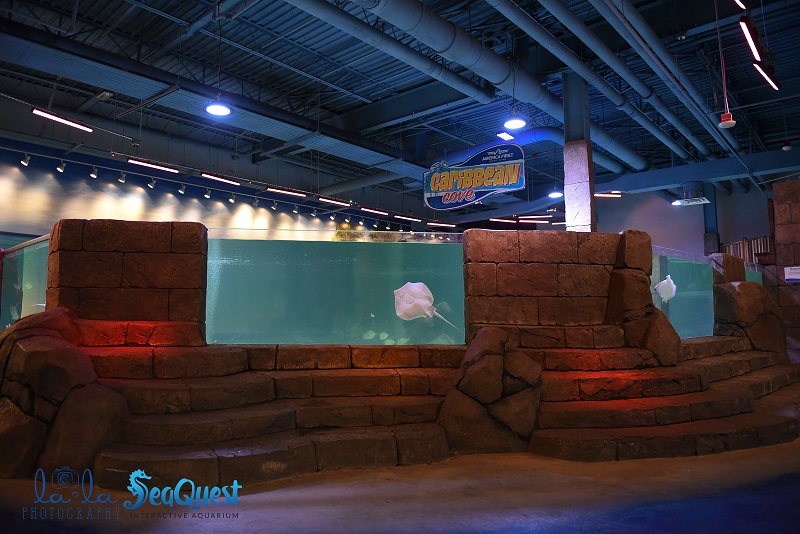 aquarium seaquest interactive