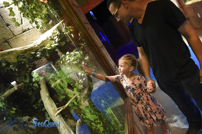 father daughter tree seaquest aquarium