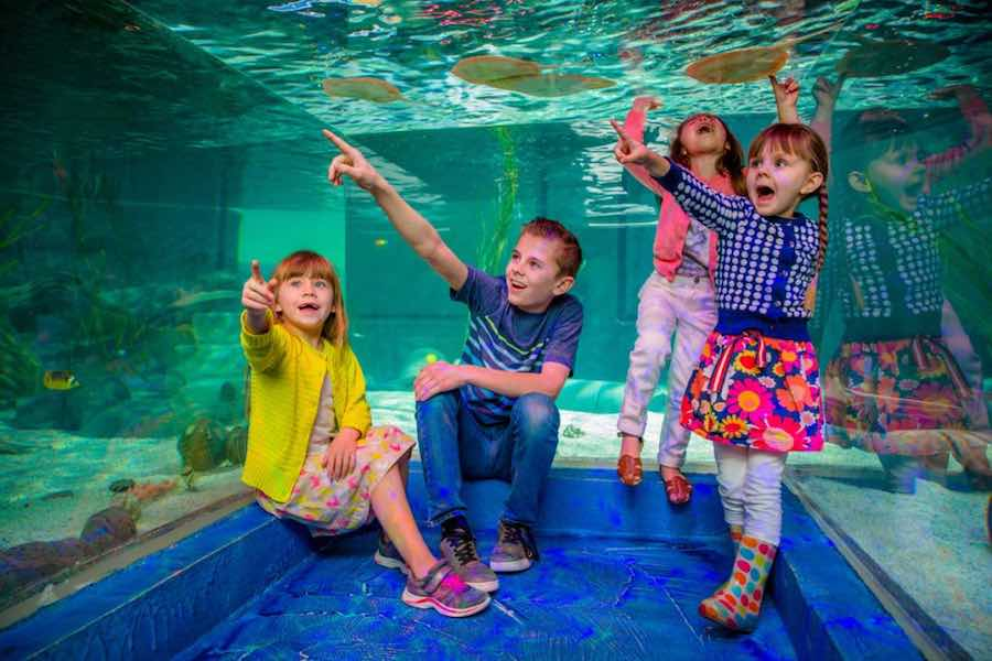 children on field trip at seaquest interactive aquariums x