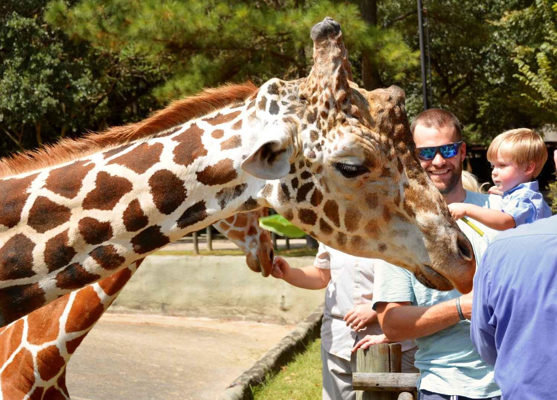 kid strokes giraffe baton rouge zoo, jackson zoo rfp