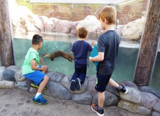 Boys water a river otter at Otter Passage at Milwaukee County Zoo