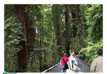 sequoia zoo redwood canopy walk masterplan