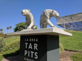 la brea tar pits and museum cave lion sculptures