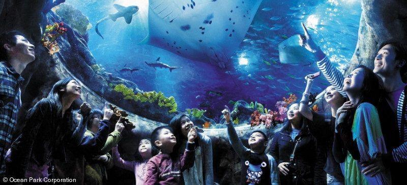 Ocean-Park-Hong-Kong-aquarium