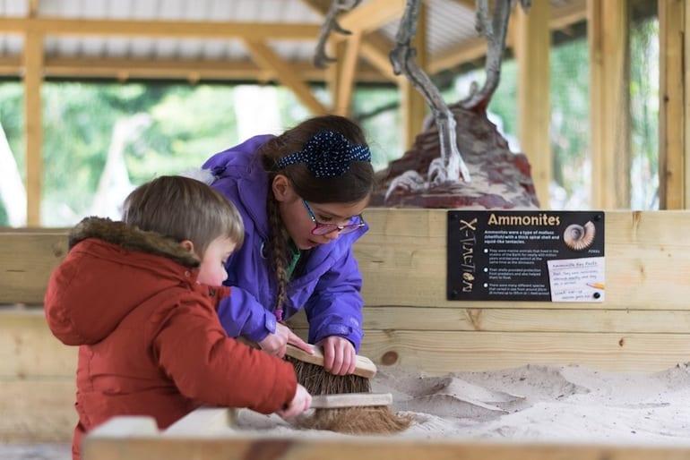 ROARR dinosaur adventure fossil dig