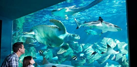 tor systems bournemouth oceanarium