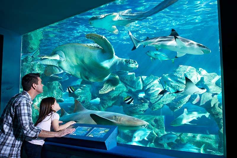 tor systems bournemouth oceanarium