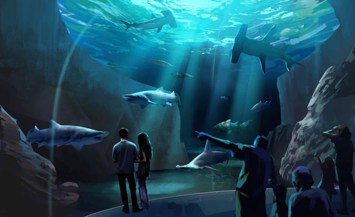 georgia aquarium new shark habitat