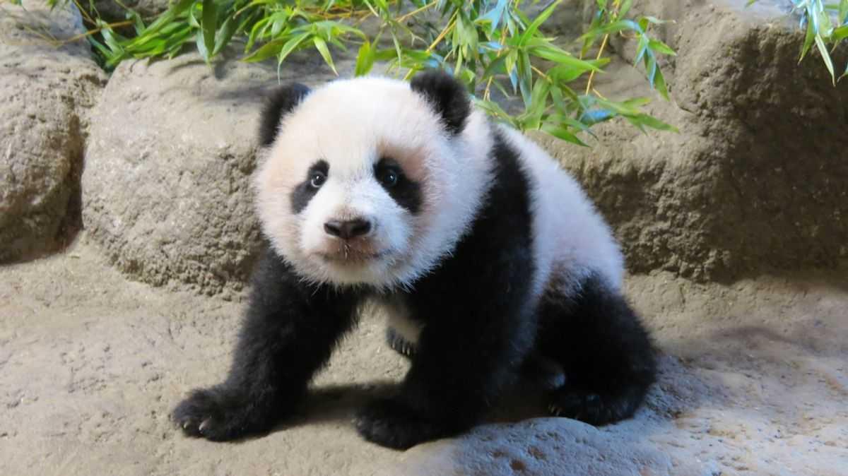 PANDA-Parques-Reunidos