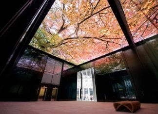 trees on ceiling part of LED art installation at London's Fen Court