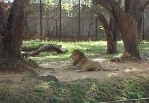 mysore zoo Karnataka