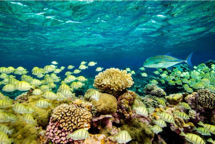 hidden pacific coral reef