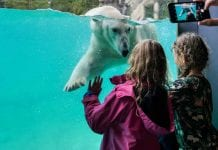 girls look at polar bear in Polarium, Zoo Rostock