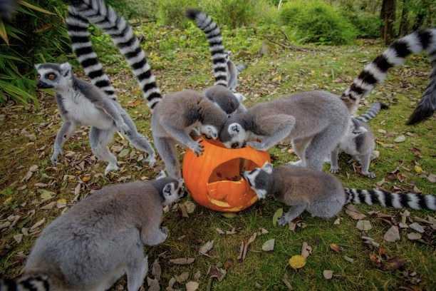 BALPPA_Halloween-fun-at-Dudley-Zoo