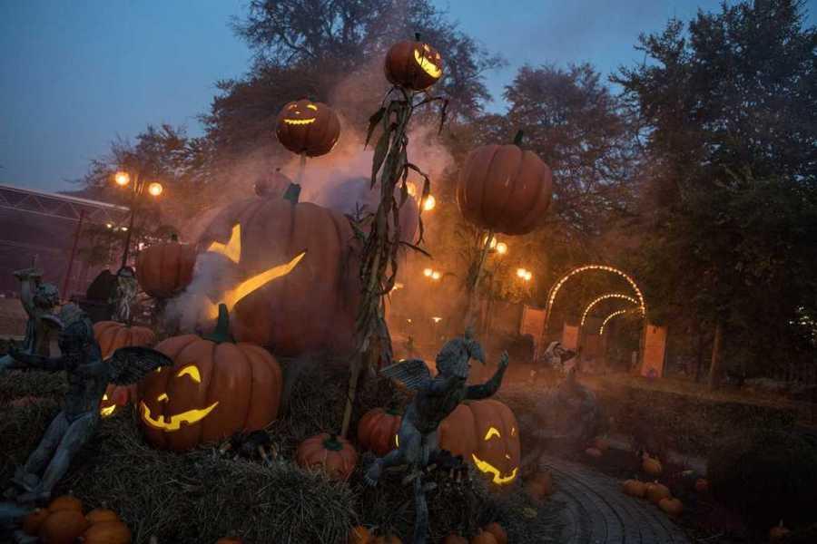 halloween pumpkins at tivoli friheden