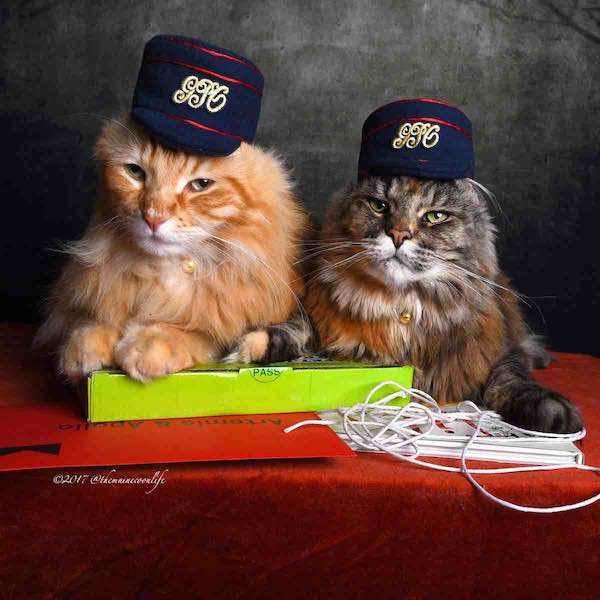 September Winners – Artemis & Apollo © 2017 @themainecoonlife the Postal Museum