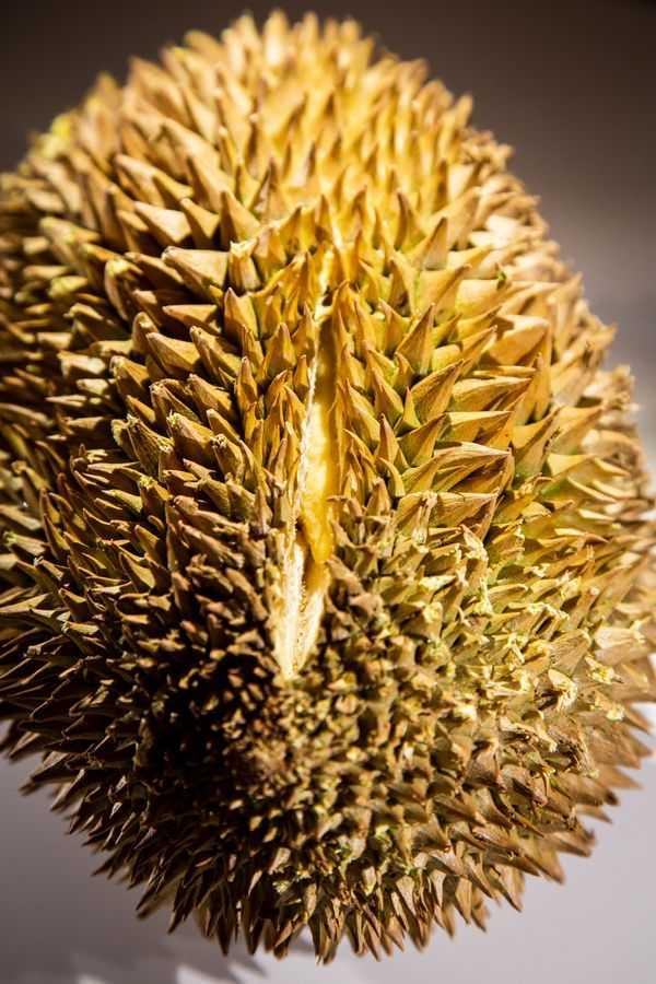 Durian, Disgusting Food Museum
