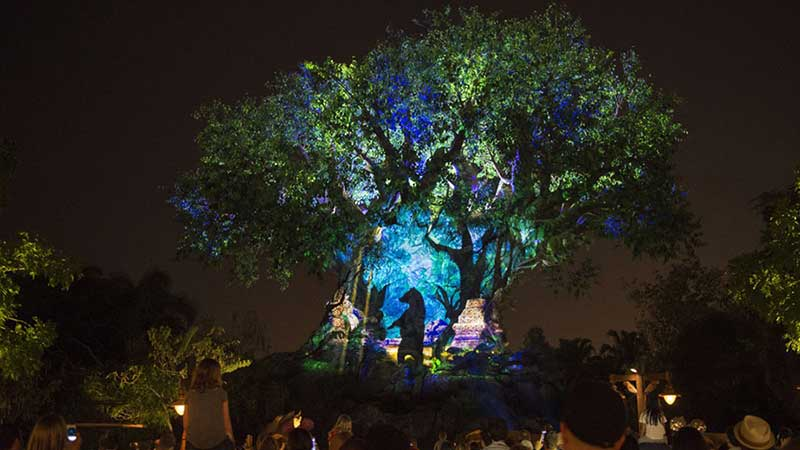 Animal Kingdom after hours disney