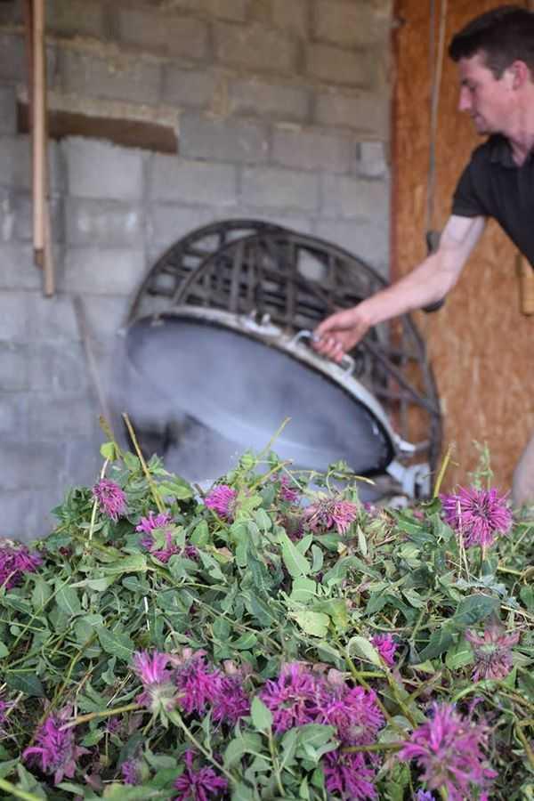 Lavender Distillation process, Sault, Provence