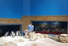 Essex-County-Turtle-Back-Zoo-Penguin-Exhibit