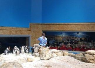 Essex-County-Turtle-Back-Zoo-Penguin-Exhibit