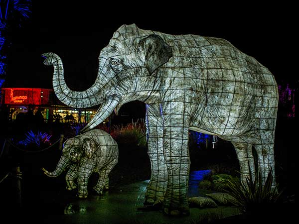 the lanterns chester zoo christmas 2018