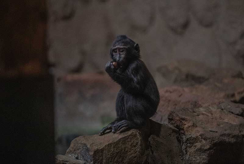 chester zoo recover from fire