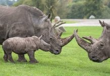 west midlands safari park acquired by looping