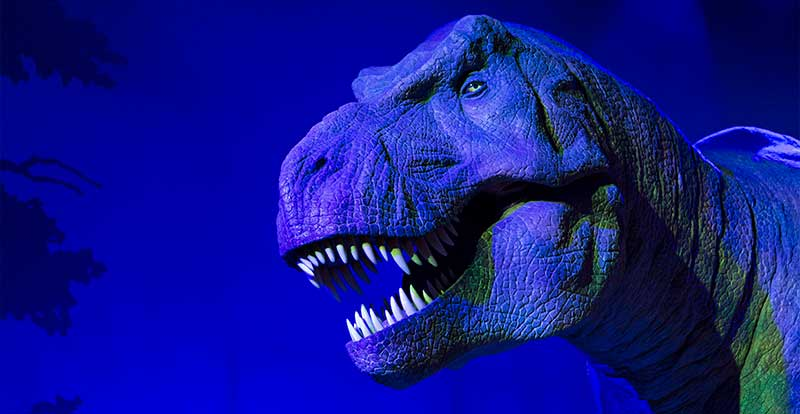 t rex at natural history museum