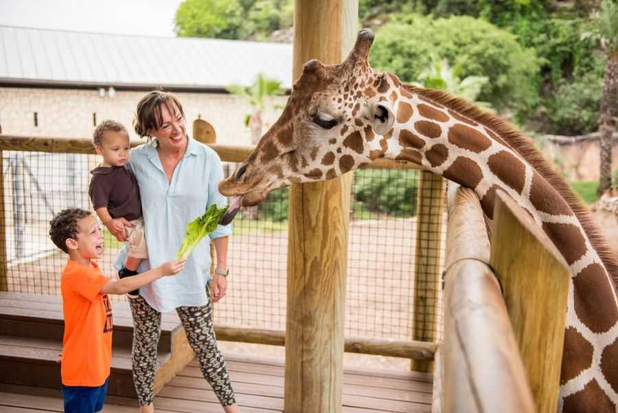 San Antonio Zoo, Giraffe feeding deck