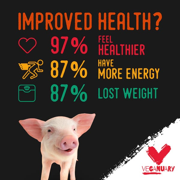 veganuary piglet improved health vegan