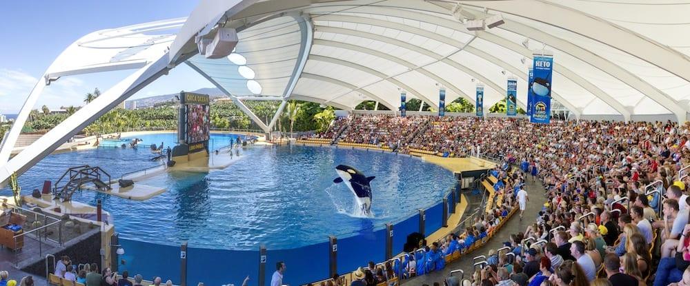 Loro-Parque-Orcas-Stadium