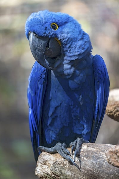 loro-parque-parrot-Kiessling-Group