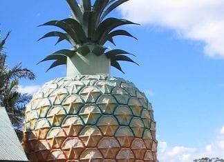 big pineapple australia