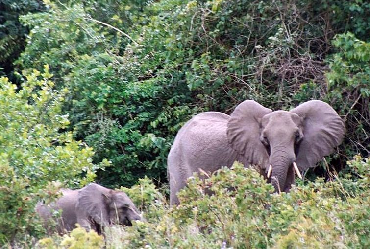 elephants at shimba reserve