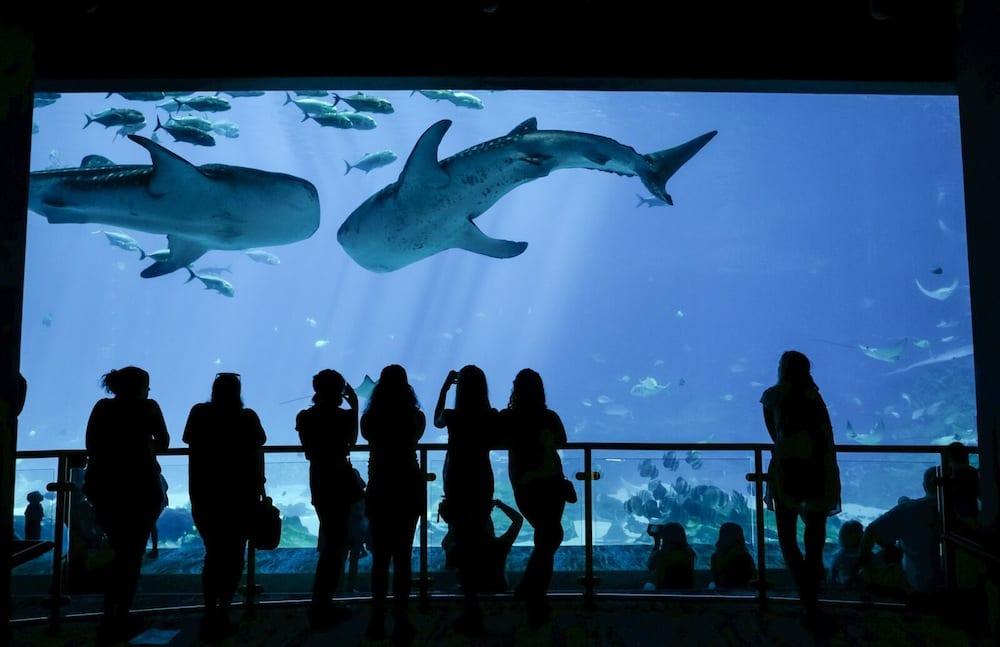 Georgia Aquarium projects, new shark exhibit