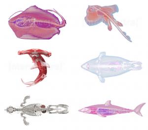 Interspectral-Inside-Explorer-Georgia-aquarium