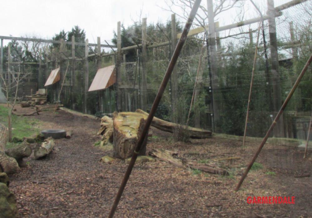 Lion enclosure by Garmendale Zoo engineering