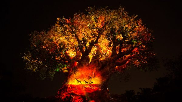 Tree of Life Awakenings Lion King Disney Animal Kingdom