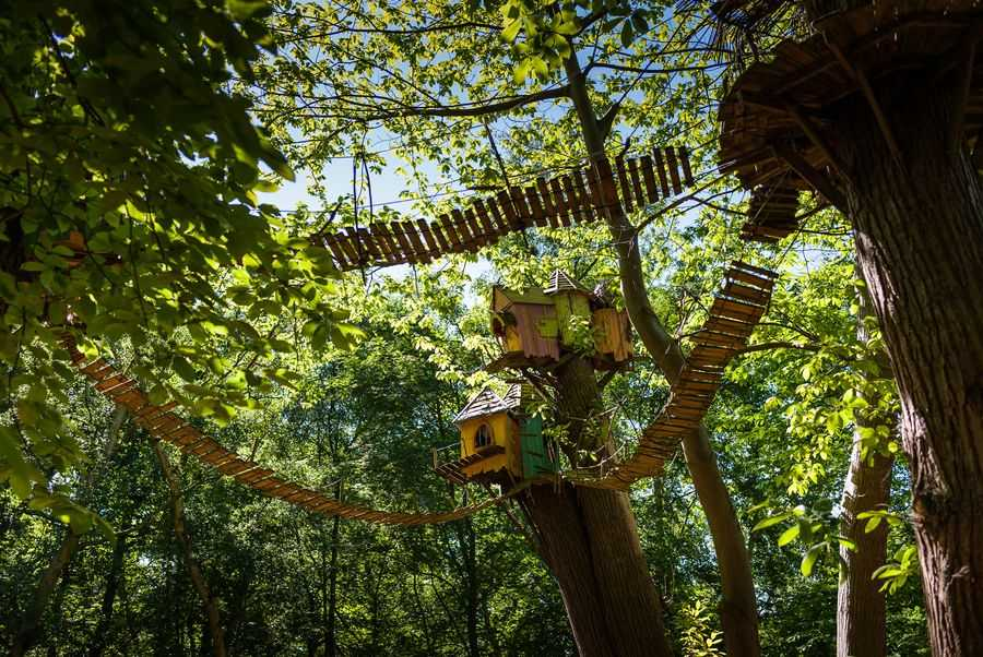 BeWILDerwood Treetop Adventure