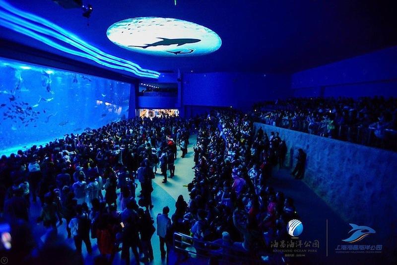 Shanghai-Haichang-Ocean-Park_aquarium