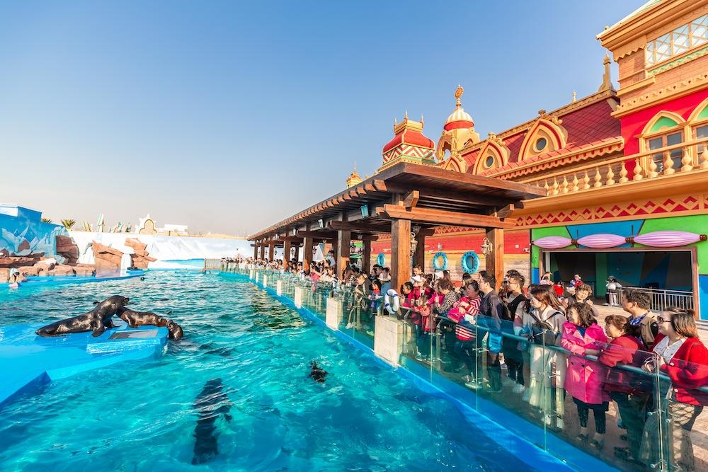 Shanghai-Haichang-Ocean-Park_sea-lions